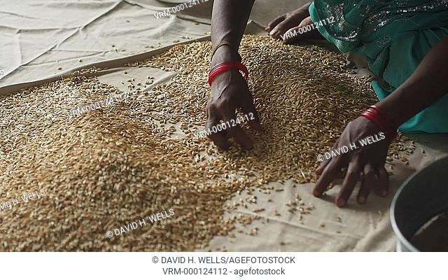 Women cleaning beans in Ahmedabad, Gujarat, India