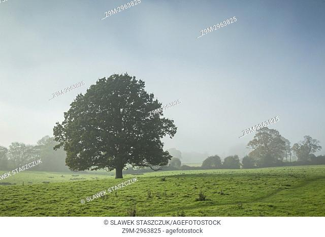 Misty autumn day in the West Sussex countryside, England