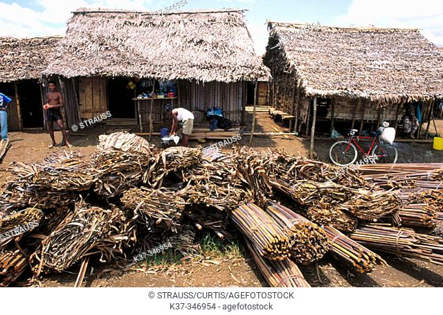 Banana leaves and bamboo used for construction in Malagasy village. Republic of Madagascar