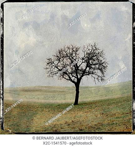 Illustration of a tree