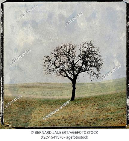 Illustration of a tree