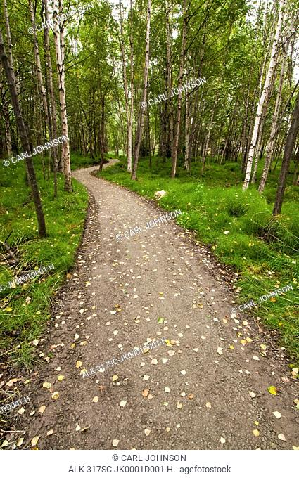 View of a trail leading through the woods in the Helen Louise McDowell Sanctuary in Anchorage, Southcentral Alaska, Fall/n