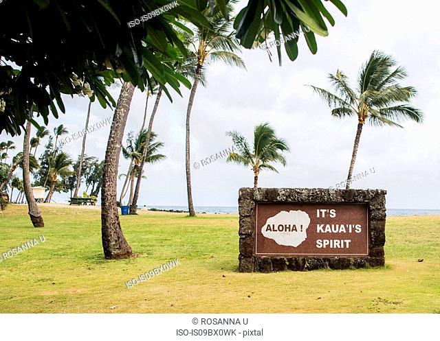 Windswept palm trees, Kauai, Hawaii