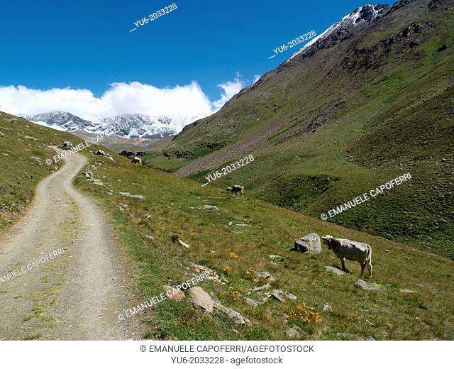 Path leading to the shelter Pizzini, beneath Mount GranZebrù, Valtellina, Stelvio National Park, Italy