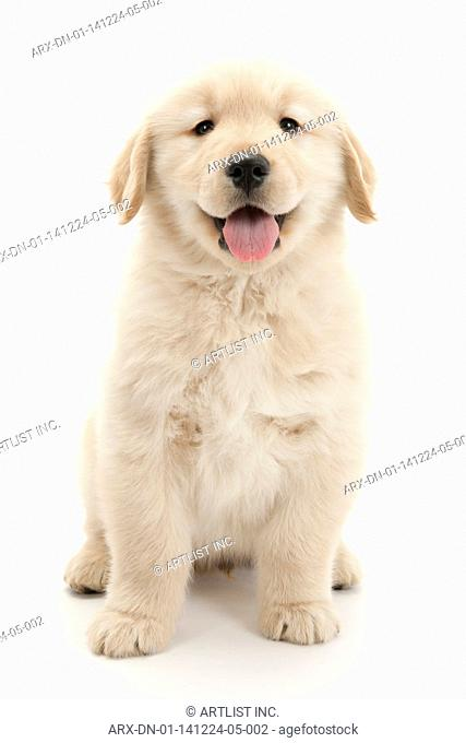 A smiling puppy