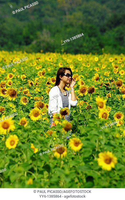 girl walking through sunflower field , sunflower fields of lopburi , central thailand