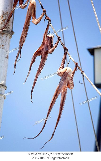 Octopus hung up to dry, Little Venice district, Mykonos, Cyclades Islands, Greek Islands, Greece, Europe