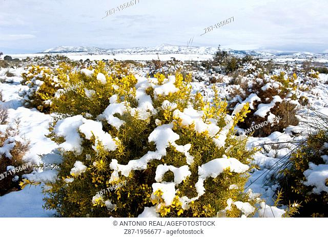 Snowy landscape, Sierra de Almansa. Almansa. Albacete. Spain