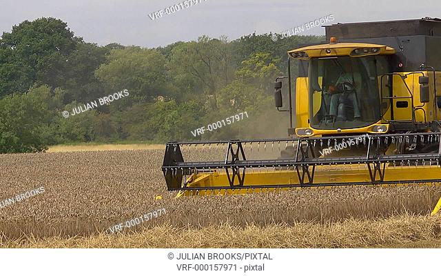 Yellow combine harvester cutting wheat at harvest time - full frame