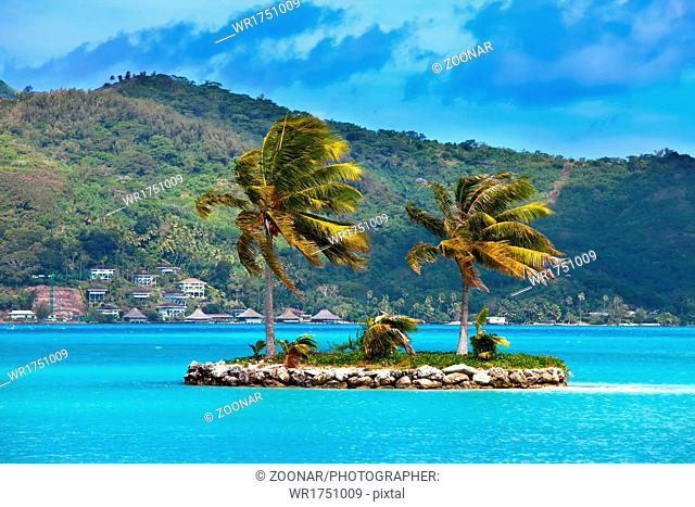 Palm trees on tropical island at ocean