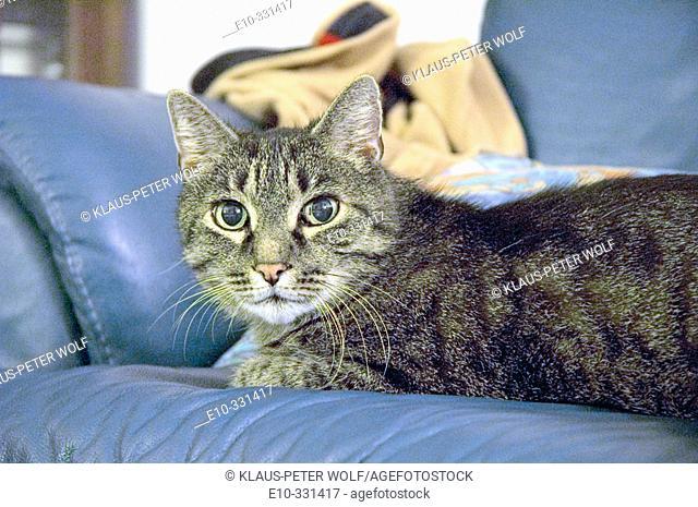 Housecat on a sofa