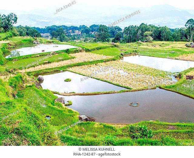Rice paddies and mountains, Tana Toraja, Sulawesi, Indonesia, Southeast Asia, Asia