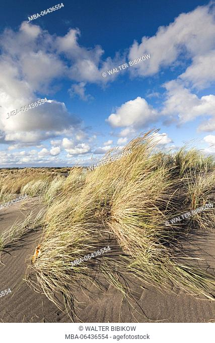 New Zealand, North Island, Wanganui, Castlecliff Beach, dune grass