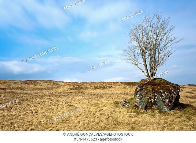 Tree, Scotland