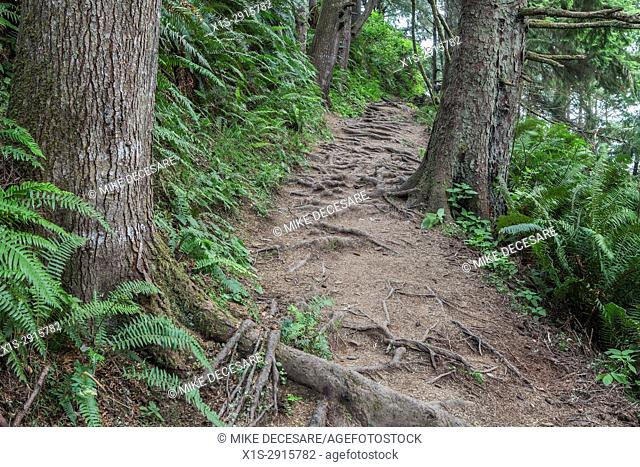 Exposed tree roots challenge any hiker along a forest trail in Oregon