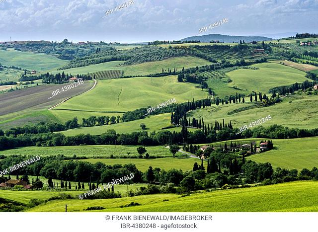 Typical green Tuscan landscape in Val d'Orcia with hills, fields, trees, cypresses and cloudy sky, Pienca, Tuscany, Italy