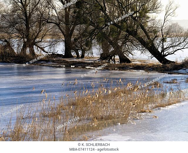 Germany, Brandenburg, Uckermark, Criewen, Lower Oder Valley National Park, winter day in the Oder meadow, ice rink, willow trees, reed