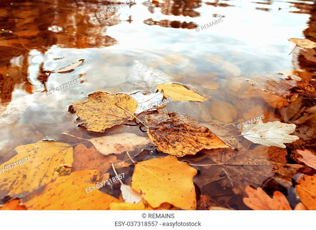 Autumn leaves on the water, close-up