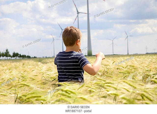 Little Boy In Cornfield, Dessau, Germany, Europe