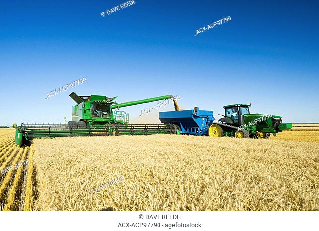 a combine harvester harvests winter wheat while unloading into a grain wagon (grain cart) on the go, near Niverville, Manitoba, Canada