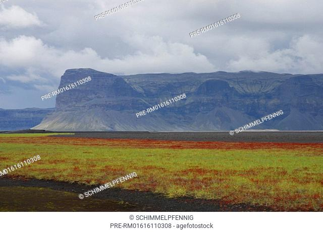 Black Lava Sand Skeiðarársandur with Sea lyme grass Leymus arenarius and red sorrel Rumex acetosella, Lomagnúpur mountain in the background, Southiceland