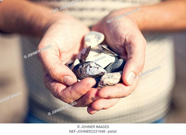 Hands holding stones and shells