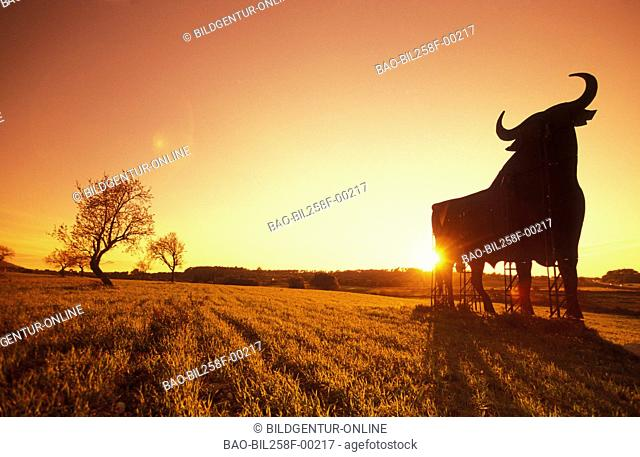 The scenery with olive trees and a bull advertisement at sundown on the island Majorca in the Mediterranean Sea in Spain