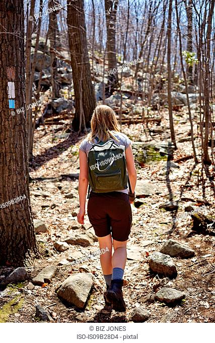 Rear view of woman hiker hiking in forest, Harriman State Park, New York State, USA