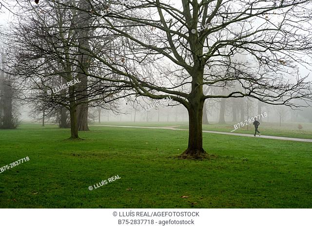 Man running through the park in a foggy morning. Kensington Park Gardens, City of Westminster and Kensington, Chelsea, London, UK