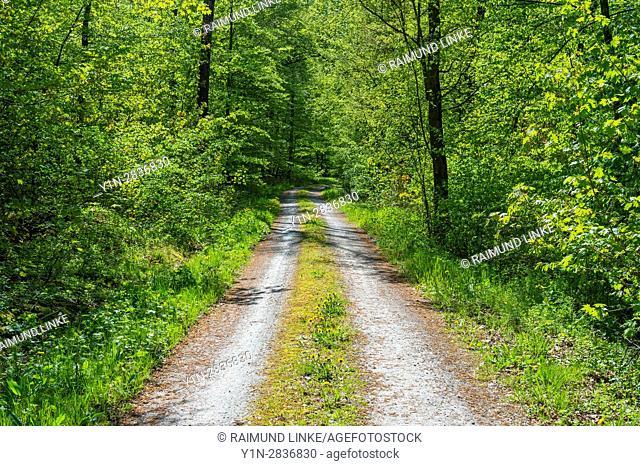 Forest path in spring, Bad Mergentheim, Baden-Wurttemberg, Germany