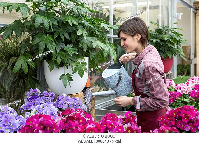 Young female gardener working in greenhouse, watering flowers