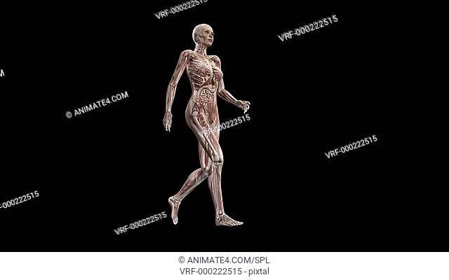 Female body walking