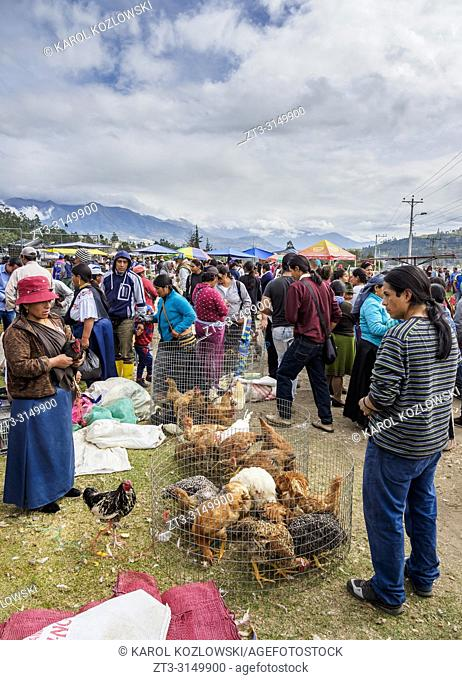 Saturday Livestock Market, Otavalo, Imbabura Province, Ecuador