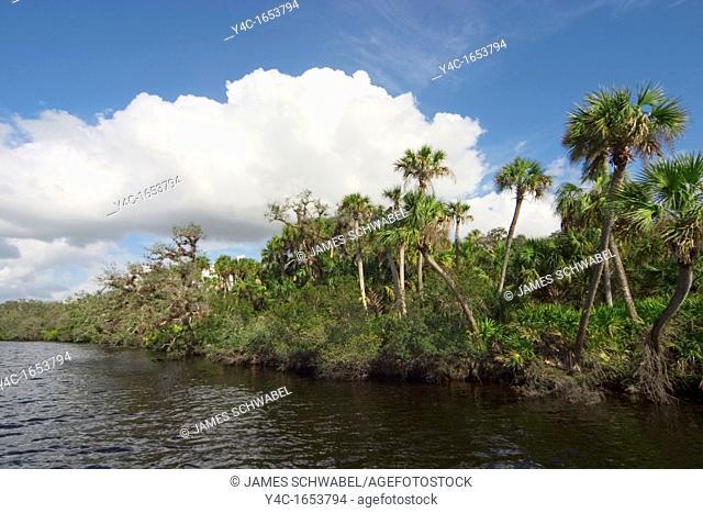 Myakka River in southwest Florida