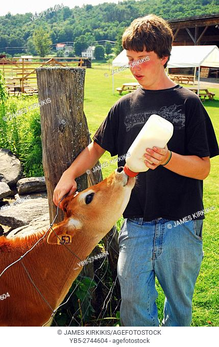 A young farmhand feeds a calf
