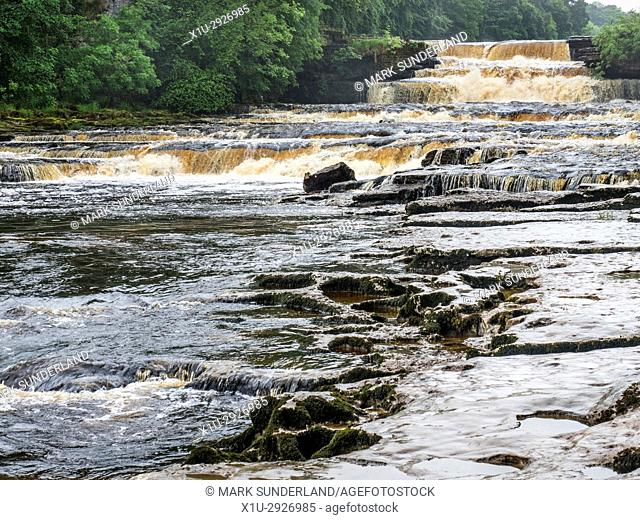 Peaty Water after Heavy Rain in Lower Aysgarth Falls on the River Ure Wensleydale Yorkshire Dales England