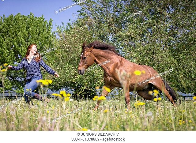Missouri Fox Trotter. Red-haired young woman playing with chestnut gelding on a pasture. Switzerland