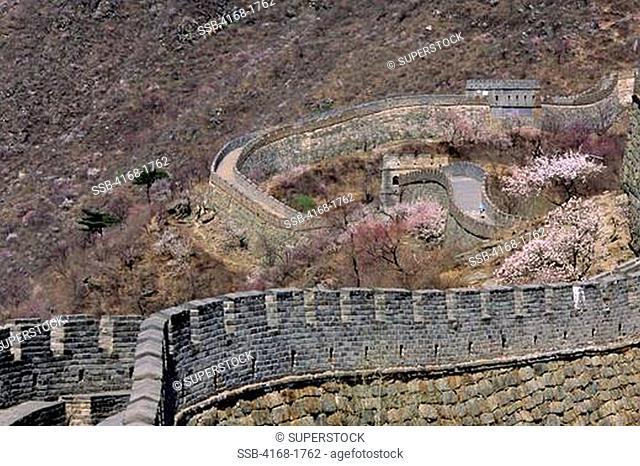 CHINA, NEAR BEIJING, GREAT WALL, FLOWERING PEACH TREES