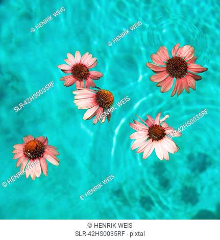 Flowers floating in swimming pool