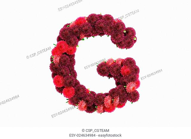 Aster flowers letter G, isolated on white