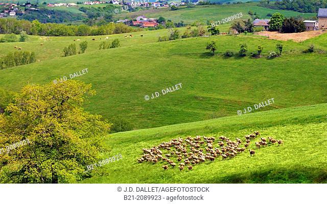 France. Auvergne. Cantal. Landscape near Maurs