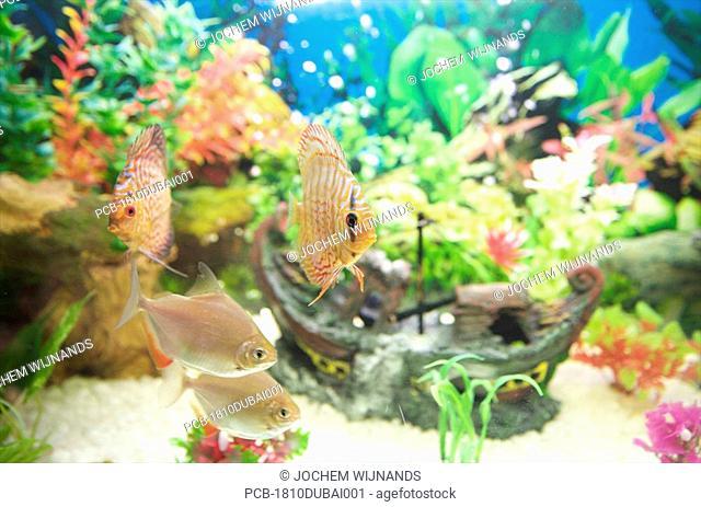 Pirate ship in aquarium