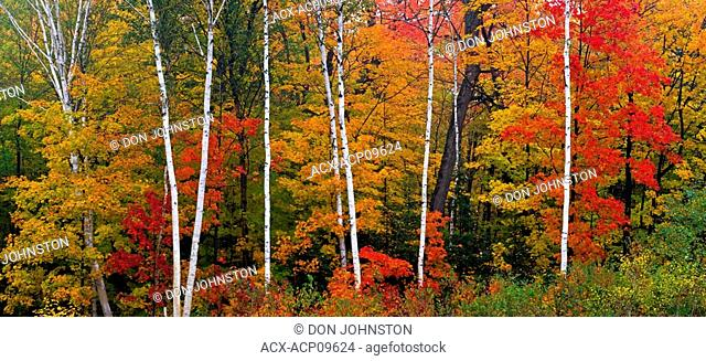 Autumn colours in hardwood forest along hwy 108 to Elliot Lake, Ontario, Canada