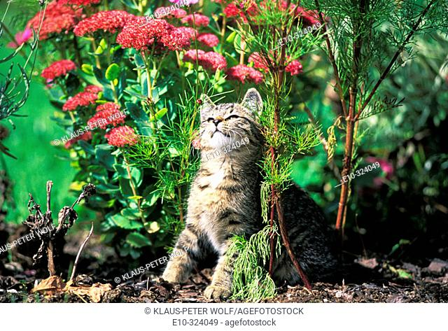 Kitten between flowers