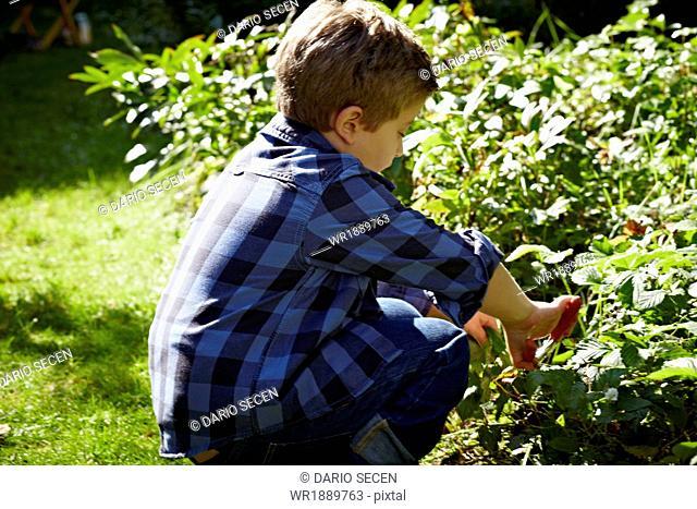 Boy Doing Garden Work, Munich, Bavaria, Germany
