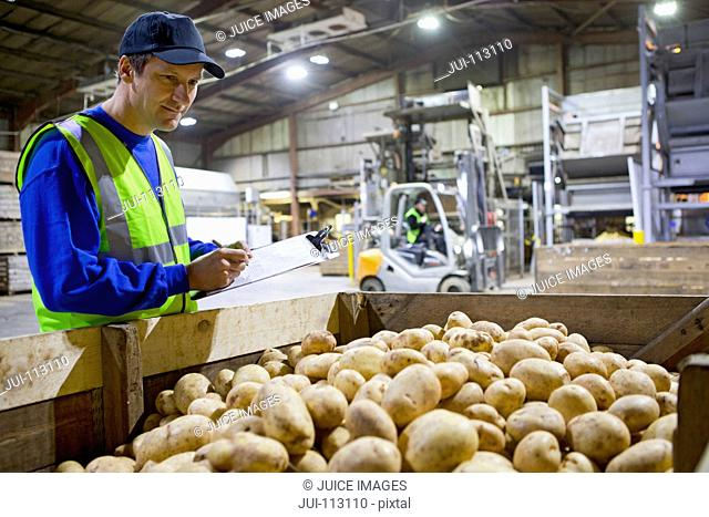 Worker with clipboard examining fresh harvested potatoes