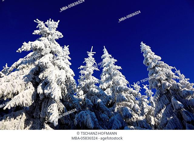 Winter scenery in the Fichtelgebirge, district Bayreuth, Upper Franconia, Bavarians, Germany