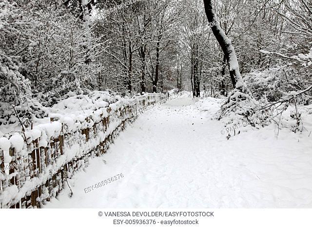 Snowlandscape in the nature reserve 'Zwin' at Knokke-Heist, Belgium. Winter 2010