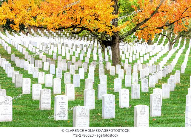 Maple trees add peak fall color to the grounds of Arlington National Cemetery in Arlington, Virginia