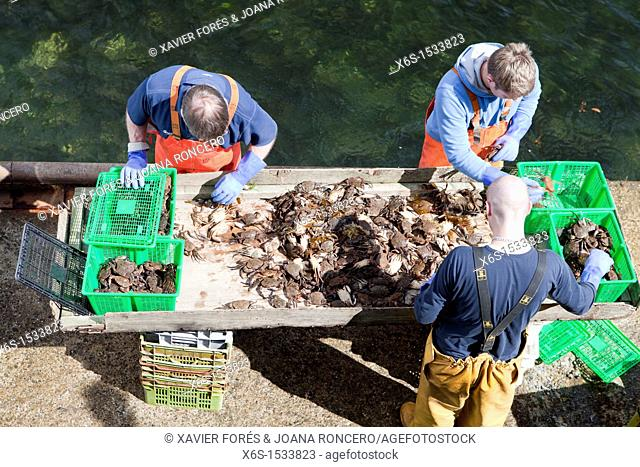 Fishers unloading crabs in the harbour of Portree or Port Righ village, Isle of Skye - Ant-Eilean Sgitheanach -, Highlands, Scotland